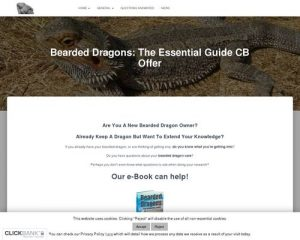 Bearded Dragons: The Essential Guide CB Offer   Bearded Dragons Rock